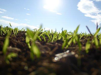 Por primera vez en la historia, el mundo crece sin contaminar más que antes