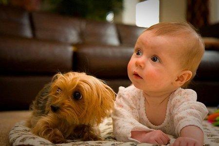 Los bebés reconocen el estado de ánimo del perro por los ladridos