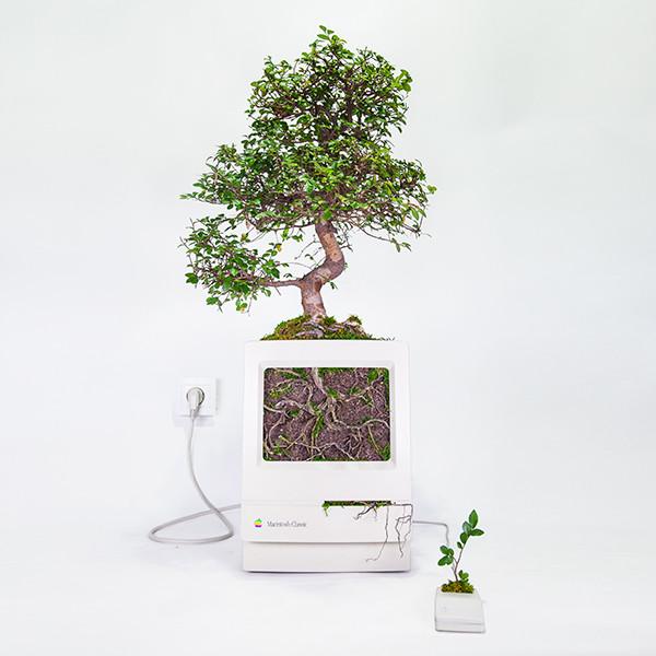 Plant You Mac Macbonzai Monsieur Plant 2016 1 Ok Carre