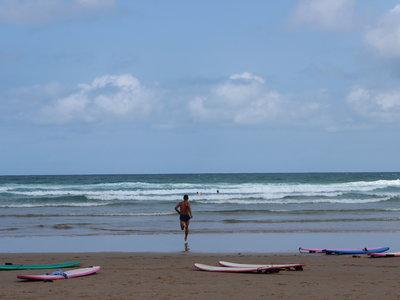 ¿De dónde procede exactamente el olor a playa? La respuesta es escabrosa