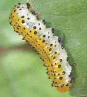 Singularidades extraordinarias de animales ordinarios (XXVI): el gusano