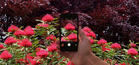 Usando un 'Shazam' para identificar plantas con tu móvil