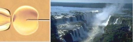 Auge del turismo reproductivo en Argentina