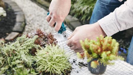 Bosch Hg Color Up Your Garden Verticalgarden Sbs Step22