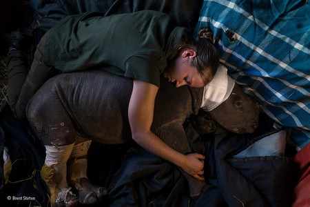 Caring For Lulah Brent Stirton Wildlife Photographer Of The Year 800x533