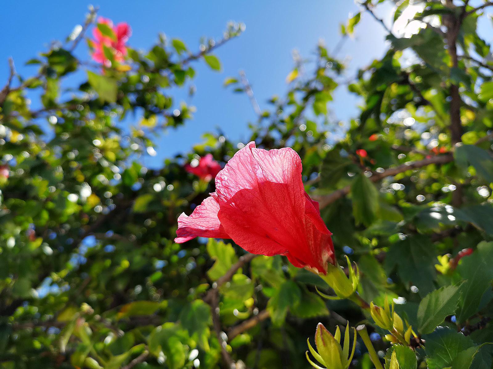 Foto de Huawei P20 Pro, fotografías con las cámaras (13/53)