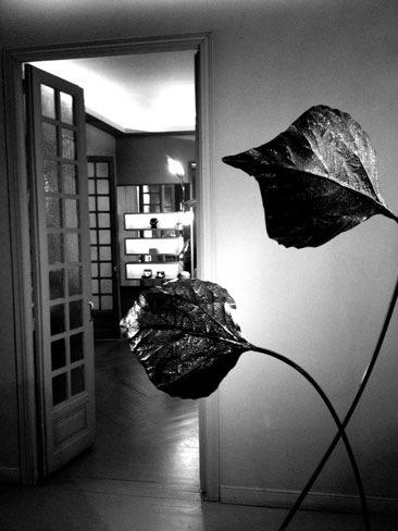 showroom-luy