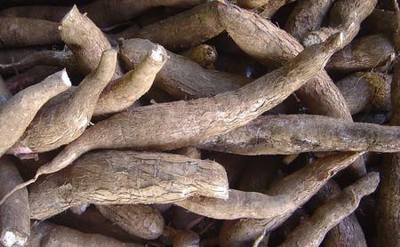 Yuca: propiedades, beneficios y su uso en la cocina