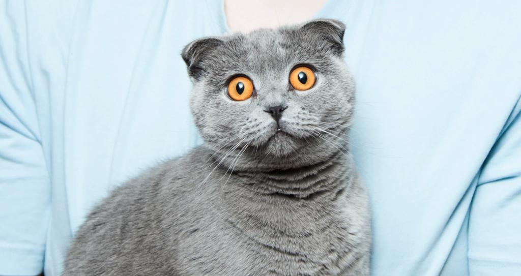 El secreto mejor guardado de los gatos es que son