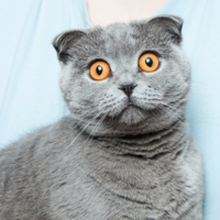 """El secreto mejor guardado de los gatos es que son """"vergonzosamente ineficaces"""" a la hora de atrapar ratas"""