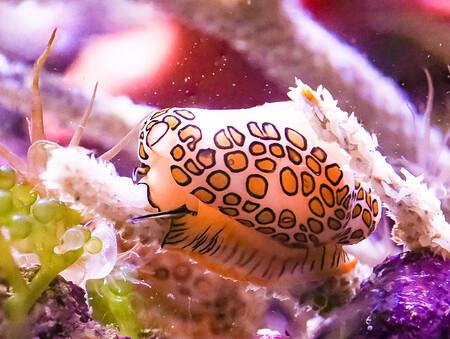 Silver C Melissa Roberston Sea Slug