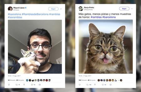 Esta es la razón por la que Twitter se está llenando de gatitos ante el atentado en Barcelona
