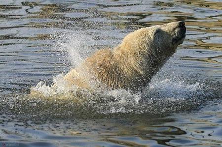 El cambio climático traerá turistas de cruceros al territorio derretido del Ártico