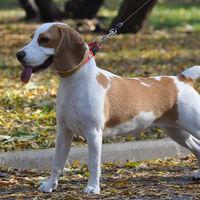 Impuestos a las mascotas: la medida alemana que ahora podrán implantar ayuntamientos valencianos
