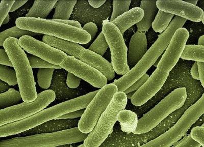Encuentran un hongo capaz de eliminar la resistencia de las bacterias a los antibióticos