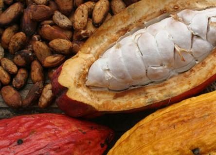 Estos son los 13 alimentos mexicanos con denominación de origen