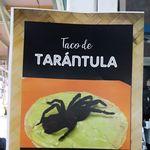 Platillo exótico: Profepa decomisa cuatro ejemplares de tarántula en mercado de Ciudad de México, los ofrecían en tacos