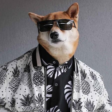 En El Nuevo Ano Chino Dedicado Al Perro Recordamos Los Mejores Looks De Nuestro Favorito Mensweardog 10