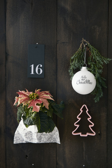 Crea tu propio calendario de adviento con poinsettias: cuatro ideas