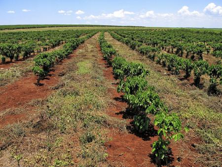 Brasil Plantacion