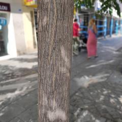 Foto 10 de 45 de la galería pocophone-f1-fotografias en Xataka