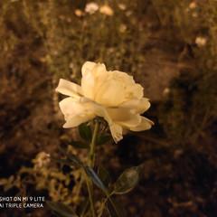 Foto 37 de 57 de la galería fotos-tomadas-con-el-xiaomi-mi-9-lite en Xataka Android