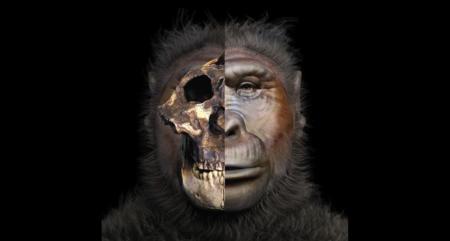 Así se reconstruye la cara de un ancestro humano extinguido