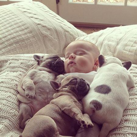 Bebé y bulldogs 3