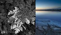 La luz y el contraste, elementos importantes en la fotografía de naturaleza