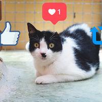 Por qué las redes sociales ayudan a la adopción animal pero también la complican: así es llevar una protectora en la era de Internet