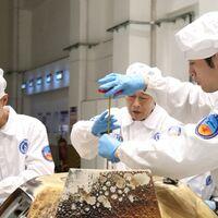 El primer cultivo aeroespacial de arroz en China: semillas de arroz que brotaron en la Luna a bordo de Chang'e 5