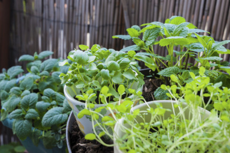 Cinco buenas razones para crear un huerto en casa
