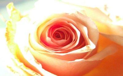 ¿Piel apagada y cansada? un tónico casero de agua de rosas