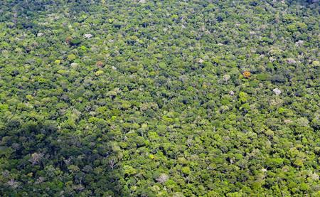 Más seco, menos bosque, más árboles: así está transformando al Amazonas el cambio climático