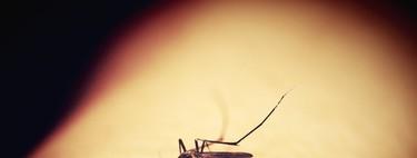 Antimosquitos del Mercadona: pulsera, Bosque Verde… lo que la ciencia dice sobre si funcionan