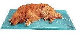 Cama fresca para tu perro