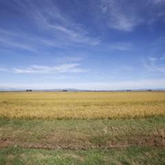 Foto 7 de 14 de la galería la-produccion-de-los-cereales-con-base-de-arroz en Vitónica