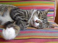 Insomnio: utiliza un perfume para conciliar mejor el sueño