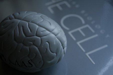 El problema de la disfunción cerebral mínima en los niños