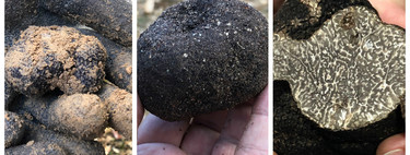 Se acerca la temporada de trufa: te enseñamos a distinguir las diferentes variedades y te damos 9 recetas para cocinar este hongo