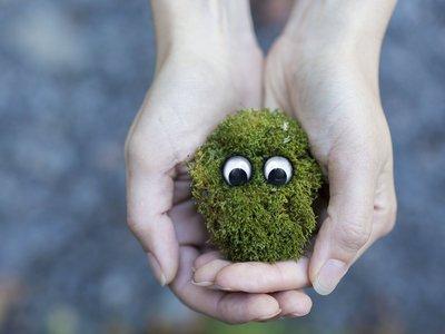 La última tendencia fascinante de Japón es pasarse horas observando musgo