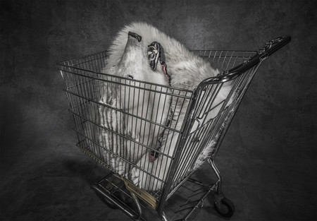 Polar Shopping Trolley De Britta Jaschinski De London London