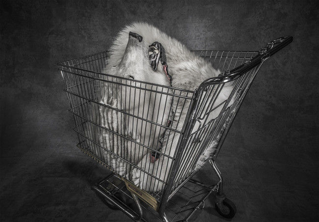 Polar Shopping Trolley De Britta Jaschinski De London London