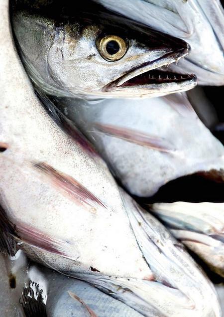Chema Concellon Pescado