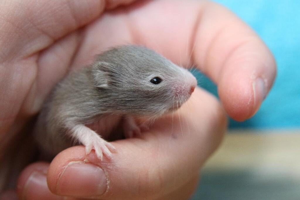 Se ha logrado obtener crías de ratón de esperma que ha estado casi seis años aguantando radiación en el espacio, según una investigación