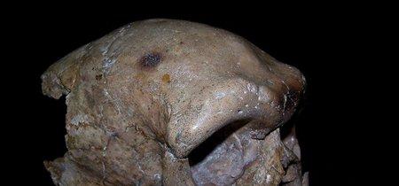 Nuestros orígenes como especie pueden ser reescritos por esta calavera china