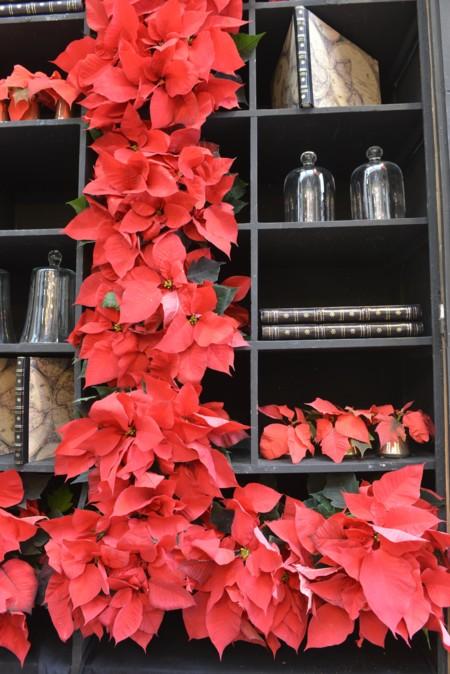 Poinsettia En Estanteria