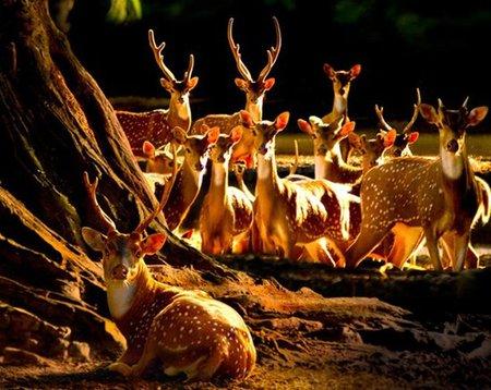 nature-photography-by-sam-lim-5.jpg