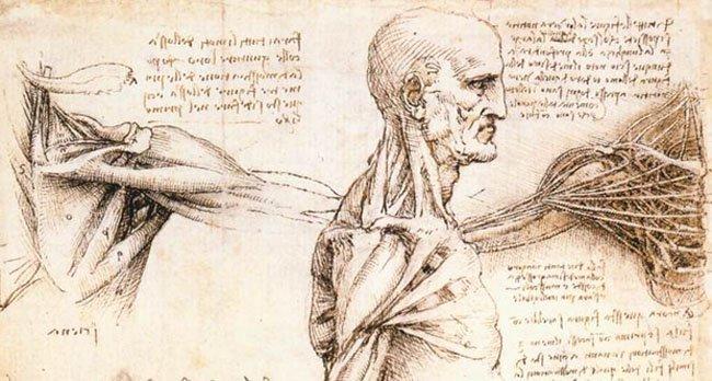 Hombro (Da Vinci)