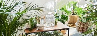 13 plantas de Ikea para decorar y llenar de verde tu terraza este verano